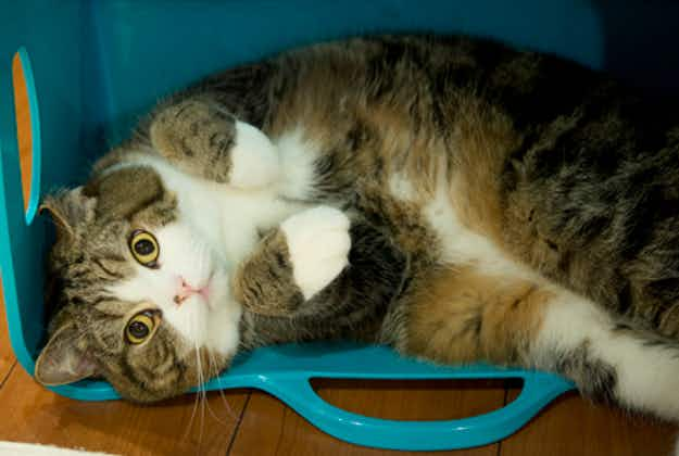 Japan celebrates National Cat Day to delight of internet