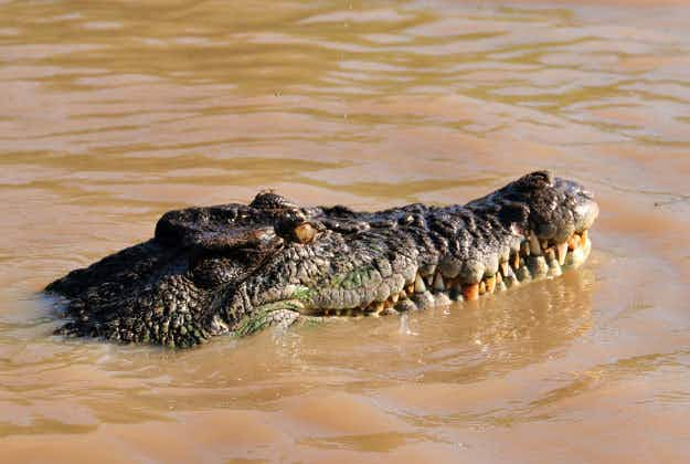 Five hours to catch a croc on tourist beach in Queensland