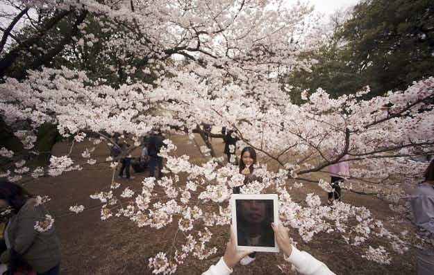 Cherry blossoms, street art, volcanoes and more in photos from around the world