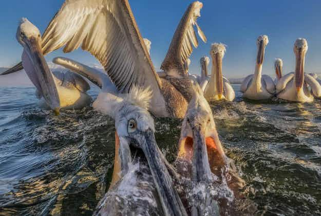 Gorgeous photo finalists showcase the world we live in