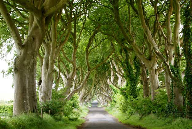 New app will guide travellers to Game of Thrones locations in Northern Ireland
