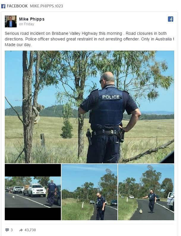 This cute jay-walking koala literally stopped traffic in Australia