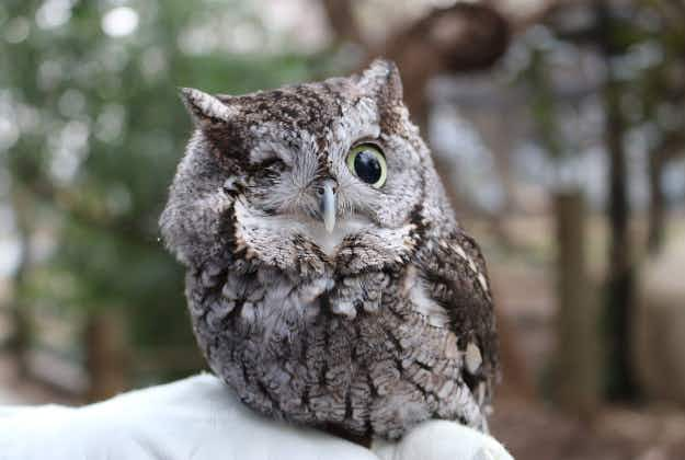 One-eyed owls and thirsty koalas: animal stories from around the world