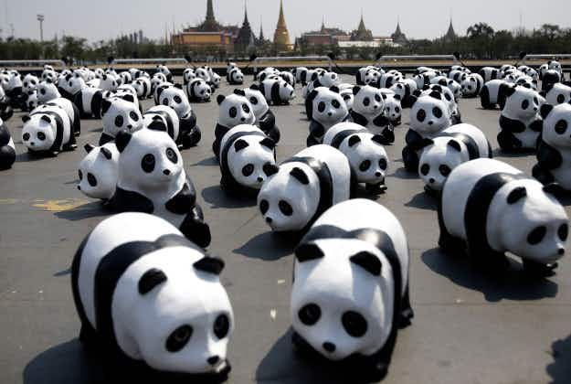 Paper pandas and Death Valley blooms: images from around the world