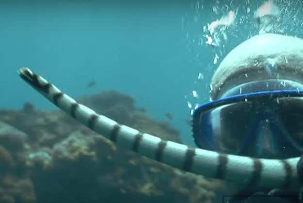 Swimming with sea snakes: new trend in holidays sees tourists swim with deadly water reptiles