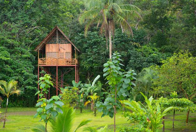 Airbnb discount encourages travellers to make treehouse dream a reality