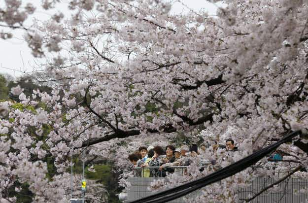 Spring, sea turtles and blossoms in today's photos from around the world