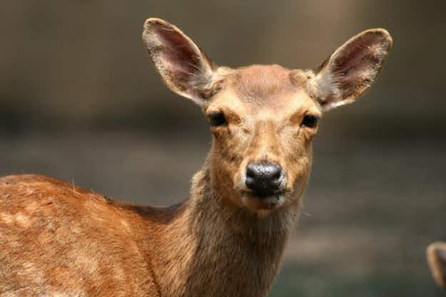 Drunk deer causes havoc in French police station for over two hours