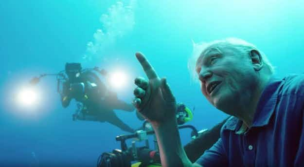 David Attenborough's Great Barrier Reef VR experience breaks new ground in storytelling