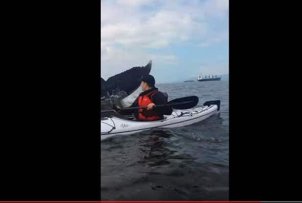 Kayakers surprised by giant humpback whale off the coast of Vancouver