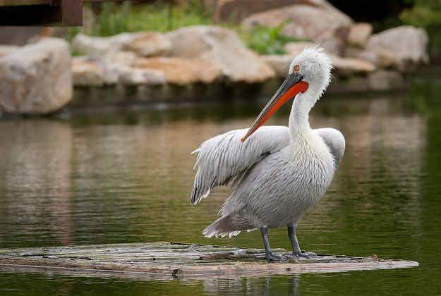 Albania develops birdwatching in Adriatic wetlands to boost tourism