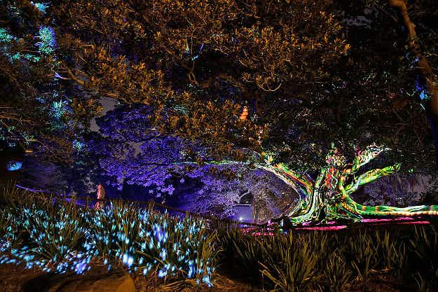 See trees in Australia light up in kaleidoscopic colours for the Vivid Sydney festival