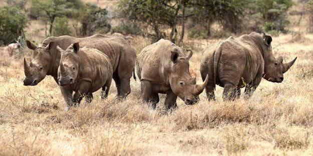 Award-winning project in Botswana brings rhinos back to their natural habitat