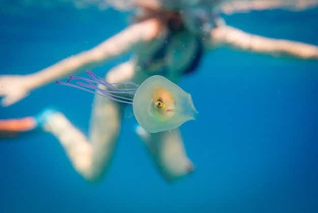Australian photographer snaps incredible image of fish trapped inside a jellyfish