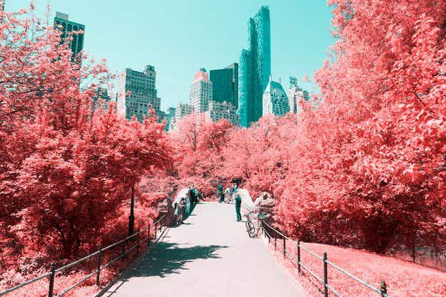 New York's Central Park looks like a wonderland in these infrared photographs