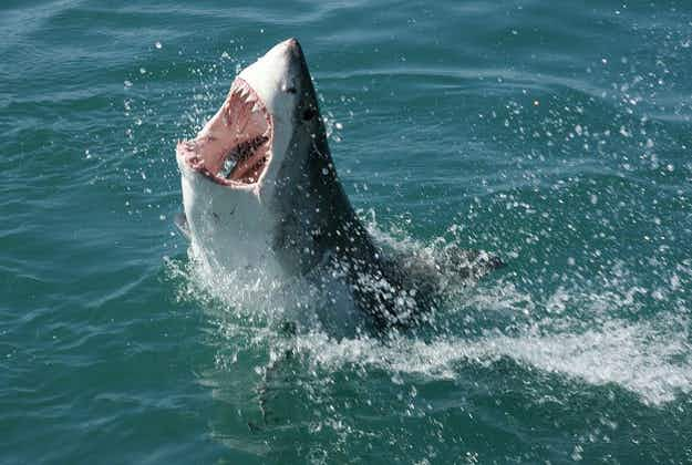 Shark-spotting tourism making a comeback on America's eastern seabord