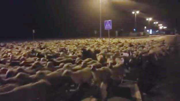 So baa-d: watch 1300 sheep take a nocturnal stroll through the Spanish city of Huésca
