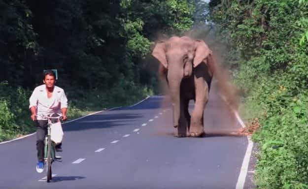 Video shows elephant chasing a cyclist on a road in West Bengal