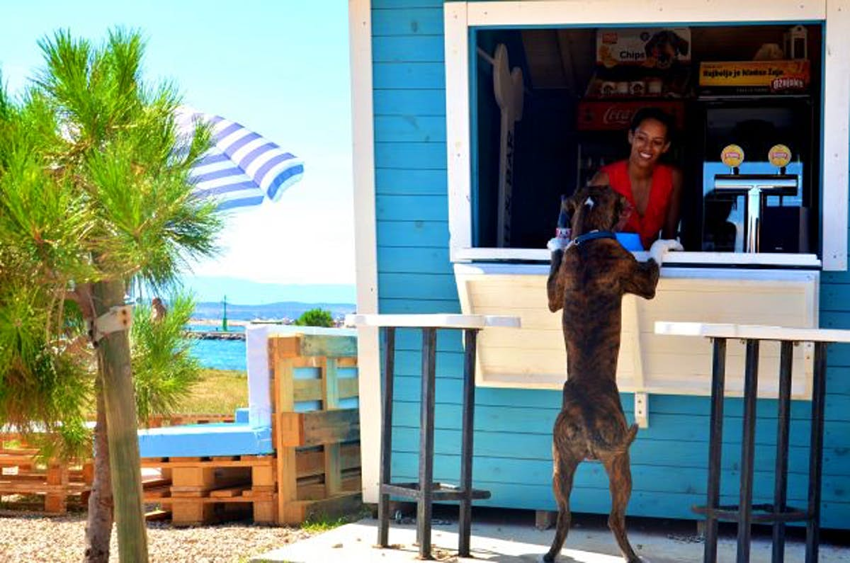 Croatia's dog-friendly beach bar serves up beer and ice-cream to your pooch - Lonely Planet
