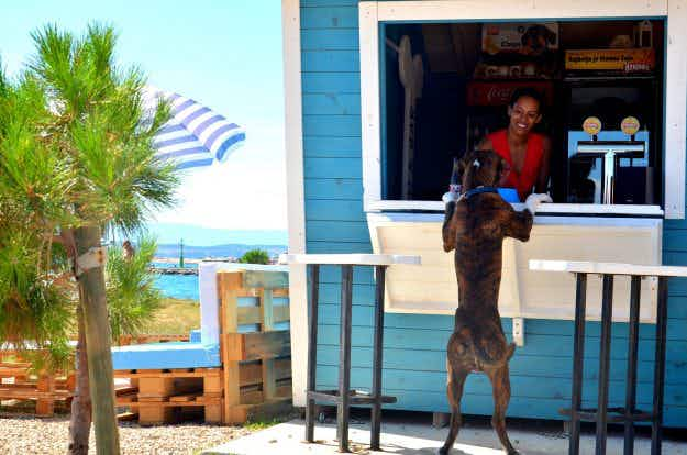 Croatia's dog-friendly beach bar serves up beer and ice-cream to your pooch