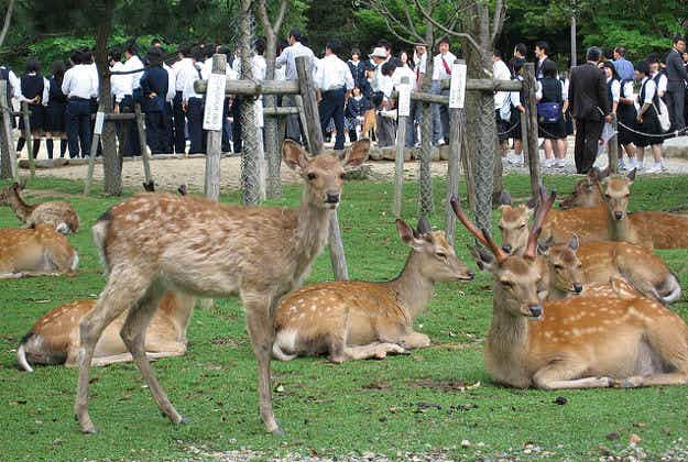 First deer summoning ceremony of the summer takes place in ancient Japanese capital