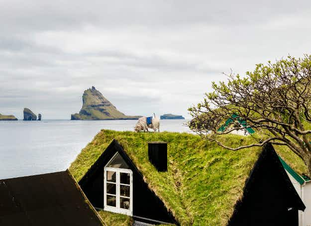Camera-carrying sheep are putting the Faroe Islands on the map and now tourists can help out