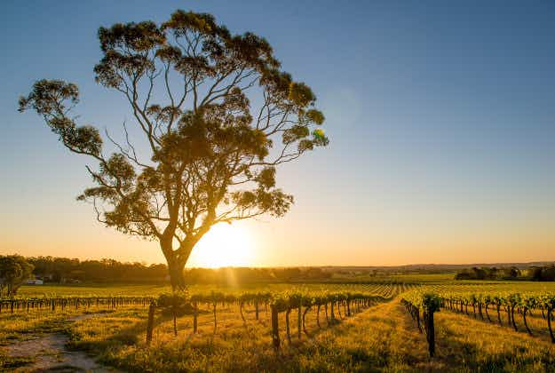 New survey names the best Australian wine regions for a liquid getaway break