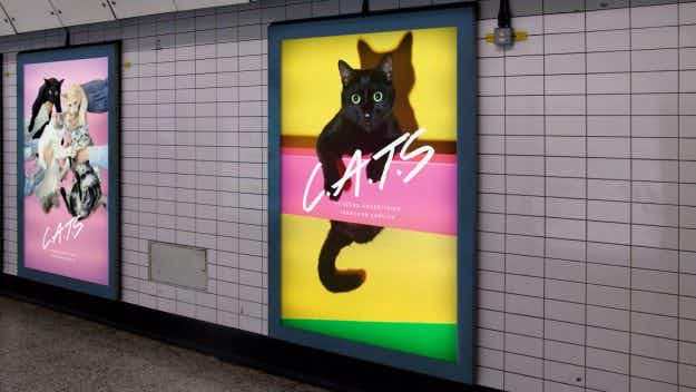 Why one London Underground station will be covered in pictures of cats next month