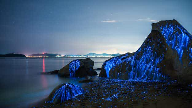 Photographers capture images of amazing bioluminescent sea fireflies in Japan