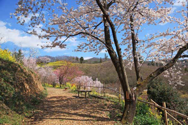 200 travellers to win all expenses paid trip to Fukushima to show the area is open for tourism