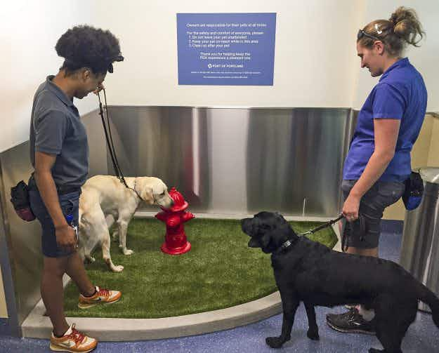 New toilet area for pets unveiled at Portland International Airport