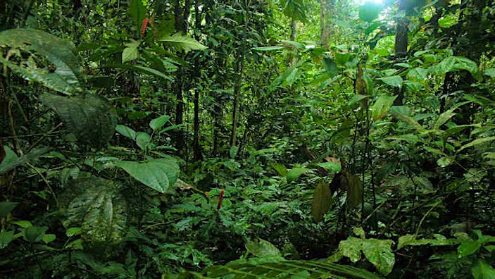 From rainforests to the table - sustainable produce that may soon be on the menu