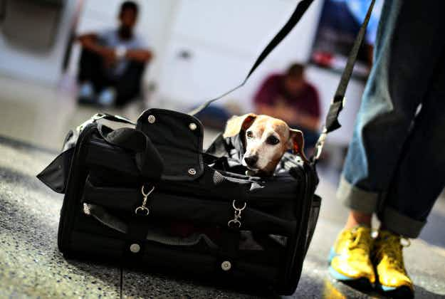Japanese airline mulls pet-friendly flights following trial