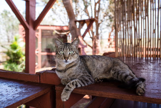 Tourists are loving this Hawaiian cat sanctuary with 500 furry felines