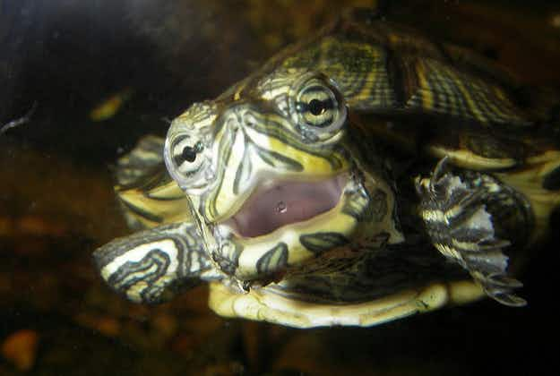 Florida officials ask public to stop painting the turtles