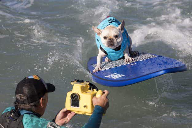 In Pictures: Surf City Surf Dog championships at Huntington Beach