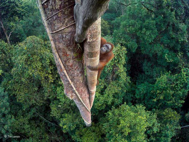 In pictures: winners of the Wildlife Photographer of the Year Competition 2016