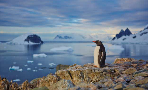 Major boost for ecosystem as world's largest marine reserve gets green light in Antarctica