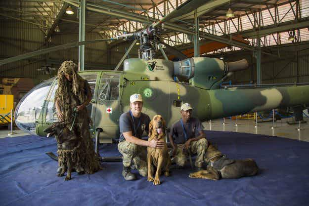 Sky-diving dogs join the fight against poaching in South Africa