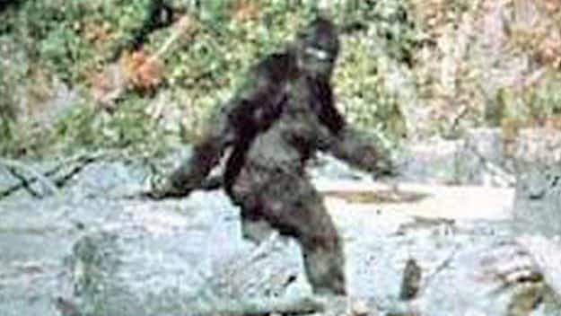 On the trail of Bigfoot: experts gather for major conference in Montana