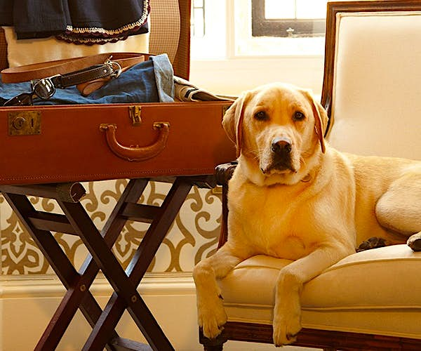 And the winners of the most wooftastic hotels in the UK are