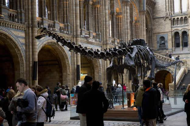 The Natural History Museum's Dippy the dinosaur will travel around the UK