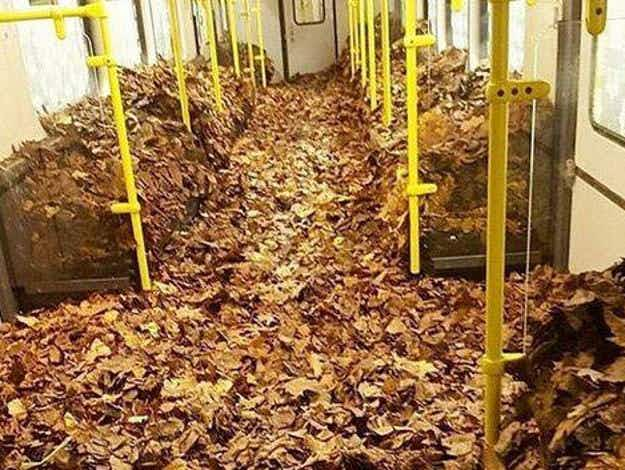 You've heard of leaves on the line, but how about IN the line? Berlin train delayed for leaf clean up