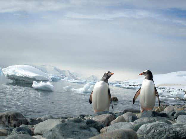 How to receive your very own Christmas card from the Antarctic