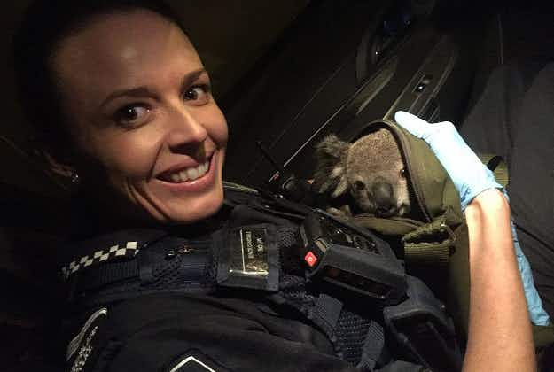 Australian police find baby koala in woman's backpack during routine stop