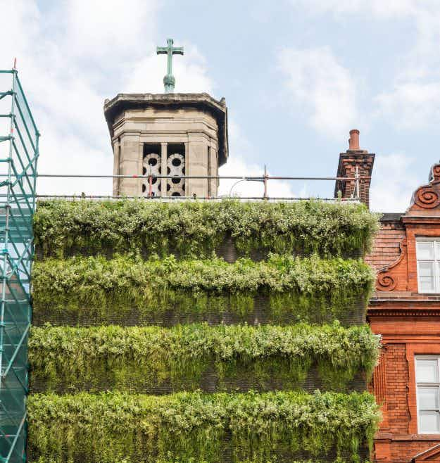 Behold this strawberry, grass and flower-covered 'living wall' attached to scaffolding in London