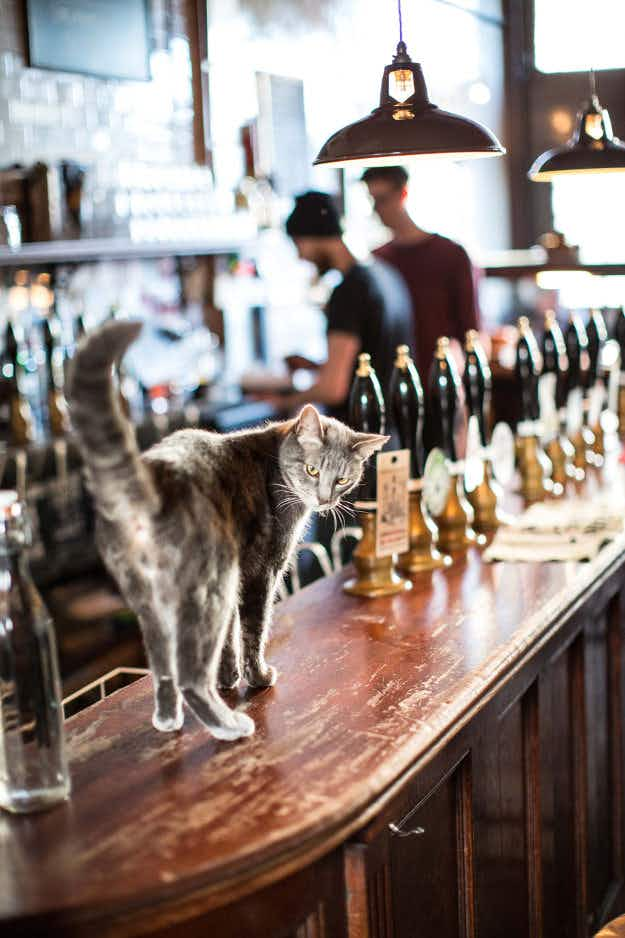 Animal-lovers can now plan the purrfect pub crawl around London to bars with feline residents