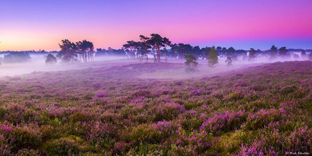 Kết quả hình ảnh cho Veluwe National Park