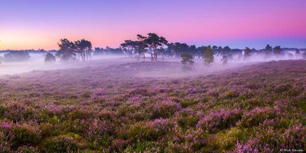 Stunning time-lapse captures Hoge Veluwe National Park in the Netherlands during all four seasons