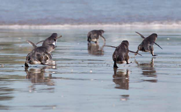 World's smallest penguins get VIP underpass in New Zealand town